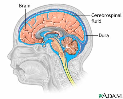 Brain Fluid