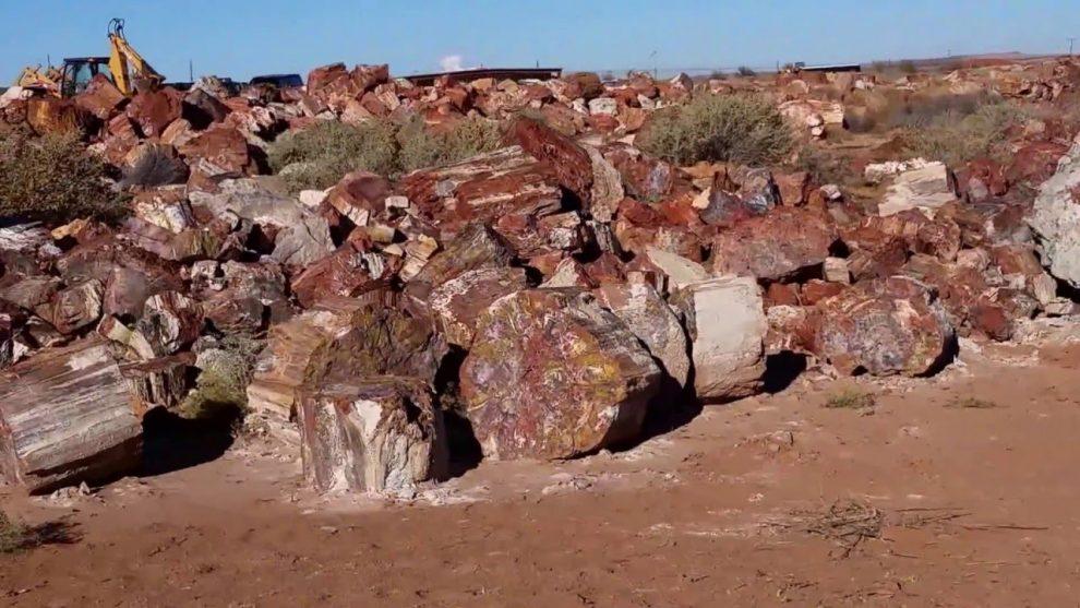 Arizona Species Found in Petrified Woods
